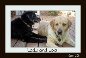Lady and Lola recommend homemade dog food