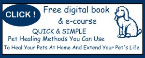 Vet Secrets, Free Digital book and e-course, Click Here