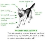 aggressive dog stance