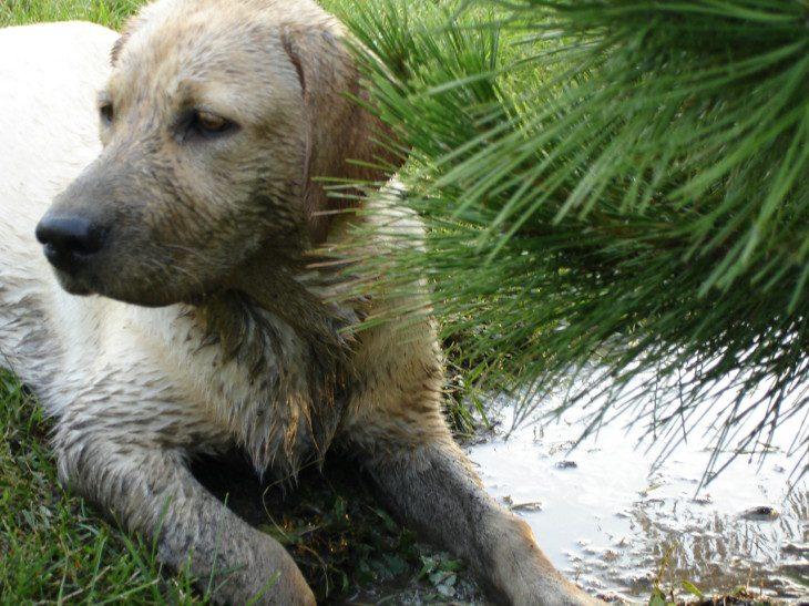 I hear mud baths are good for girls skin
