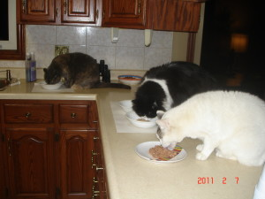 Buddy, Jinx and Zena at dinner time
