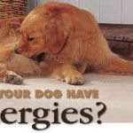 Causes of Allergies in Dogs |  Reduce Dog Allergies