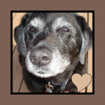 Best SENIOR Dog Food Recommendations    Best Dog Food for Seniorswhat is in my dog food recommended dog food best picks for seniors
