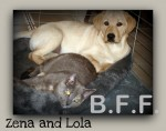 Lola @ six months old, sleeping with her best friend, Zena the Cat