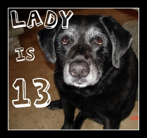 How to Manage Arthritis in Senior Dogs picture