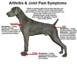 ARTHRITIS IN DOGS