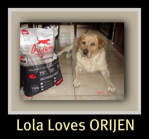 Lola with her new bag of ORIJEN
