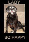 Dog Food Secrets from Lady