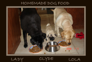 Lady, Lola and Clyde eating homemade dog food