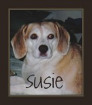 Susie with chewie 1 132x150  Make Homemade Dog Food | Help Prevent Canine Cancer