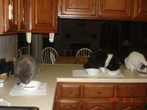 Zena, Jinx and Buddy at breakfast
