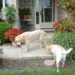 Understand and Interpret Dog's Behaviour