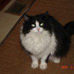 Cat Secrets Revealed