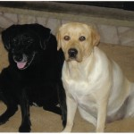 CLICK LADY AND LOLA FOR MORE INFORMATION ABOUT DANGEROUS DOG FOOD
