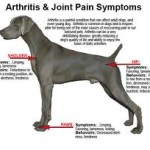 Natural Help for Dog Arthritis