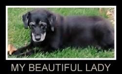 dog food secrets review
